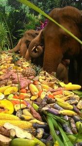 An elephants picnic. An elephant breeding camp is 2 km away.